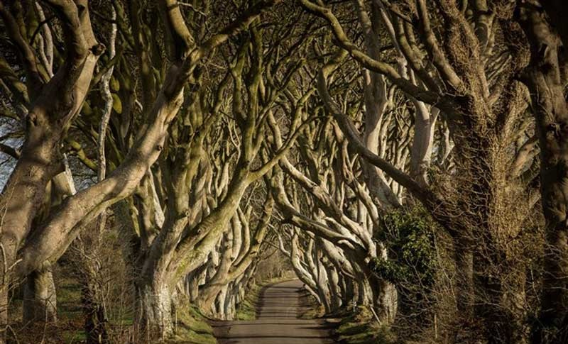 15-The-Dark-Hedges-Banner-Copyright-Northern-Ireland-Tourist-Board-2010-662-x-442